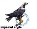 Imperian Eagle